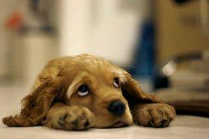 sad_dog