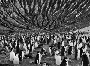sebastiao-salgado-genesis-penguins