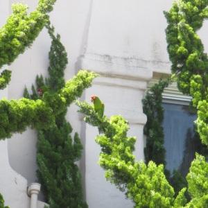 GAM-parrots1