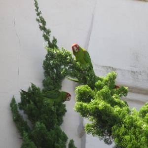 GAM-parrots2