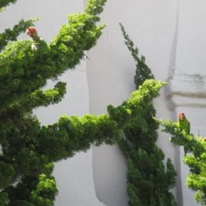 GAM-parrots3