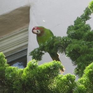 GAM-parrots6