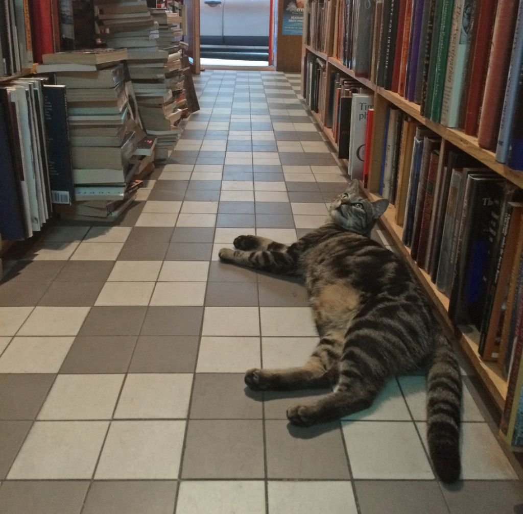 "This cat has been coming in to San Francisco Book Co. to escape the heat. Asked about the cat's name, bookseller Richard Aldersley said, ""Here's one, off the cuff: Penelope."""
